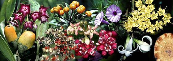 Australian Tropical Rainforest Plants - Trees, Shrubs and Vines